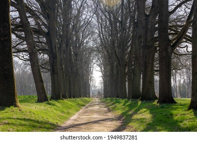 Countryside landscape with view of nature path with row of trees and green grass meadow along the ways, Sunny day in early spring with narrow tree on the sidewalk, Gelderland, Netherlands.