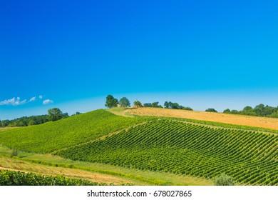Countryside landscape, vineyard in Daruvar region, Croatia