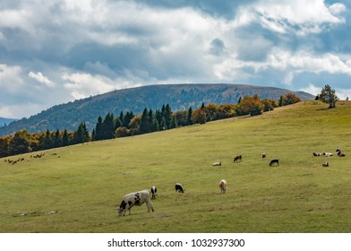 countryside landscape in the vosges Mountain in France