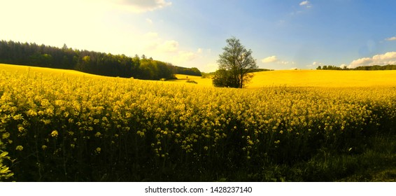 Countryside landscape with yellow (probably colza) agriculture field at spring daylight. Blue sky, tree. Panoramic image.South Moravia,Europe.