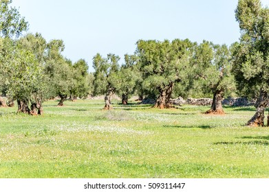 Countryside near Ostuni in the Coastal Dune Natural Park