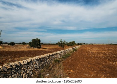 Countryside of olive fields in Salento, Italy