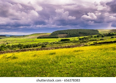 Countryside on springtime, farms in Forest of Bowland, Lancashire, England UK