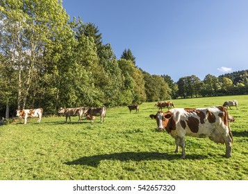Countryside pastoral view