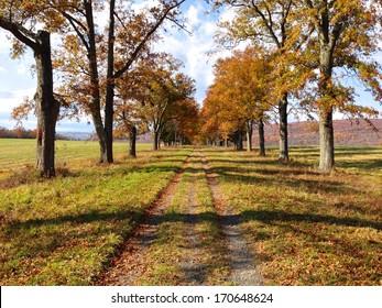 Countryside Path