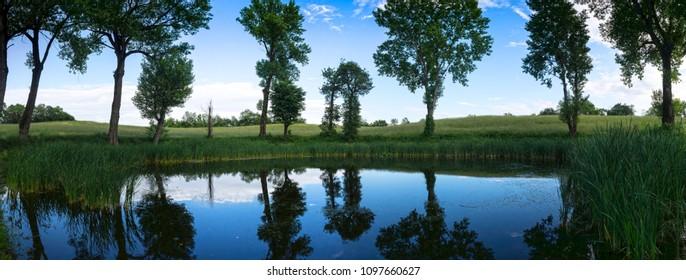 countryside pond with poplars trees in spring