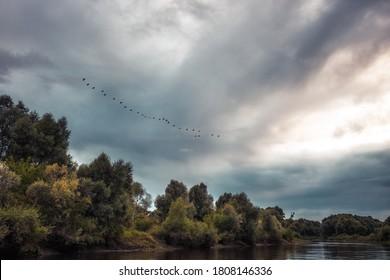 Bord de rivière à la campagne avec un troupeau de grues sur un ciel spectaculaire comme paysage d'automne avec une eau tranquille