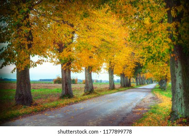 Countryside road among the trees in autumn. Masuria, Poland. Analog style.