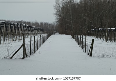 Countryside road with apple orchards on both sides covered with snow during winter