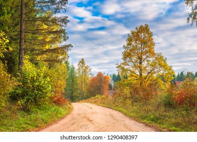 Countryside road in autumnal forest