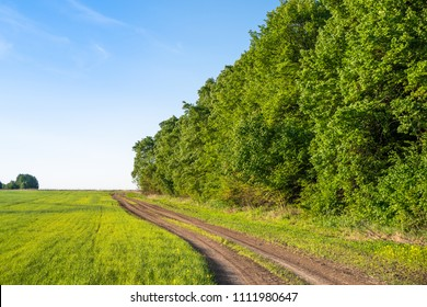 Countryside road with blue clean sky and green grass and woods