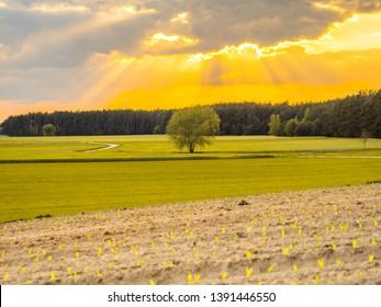 A countryside road during sunset spring time. Podlasie. Podlachia. Poland, Europe. The region is called Podlasko or Podlasze.