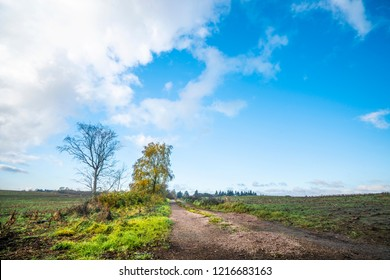 Countryside road in the fall with trees in autumn colors next to a field