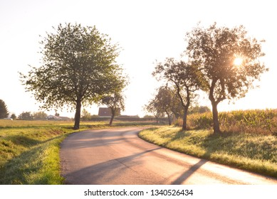 Countryside road with trees in morning sunrise shine.