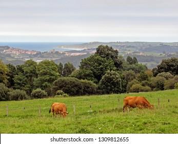 Countryside of San Vicente de la Barquera, Asturias, Camino de Santiago Coastal route, pilgrimage of Compostela along the Northern coast of Spain