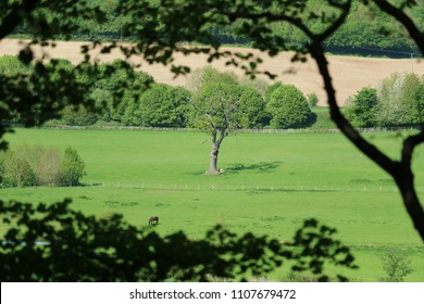 Countryside scene, standing tree and horse in field, seen through foliage.