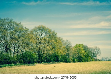 Countryside scenery with trees on a field