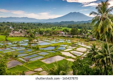 Countryside in Sumatra