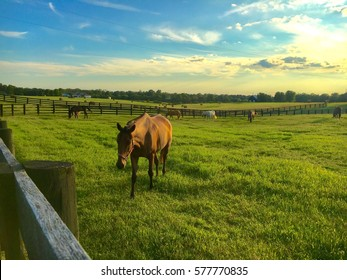 Countryside at sunset. Green pastures of horse farms.