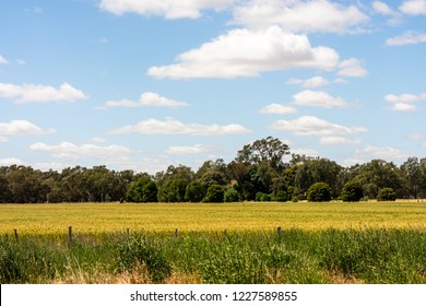 The countryside of Victoria, Australia, with farm land, trees, blue sky and clouds, background