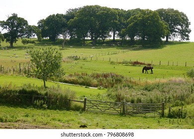 Countryside view of animals in farmers field in North Yorkshire.