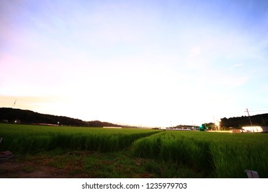 Countryside View of Paddy Field