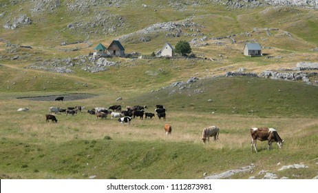 countryside village in Lukavica, Montenegro