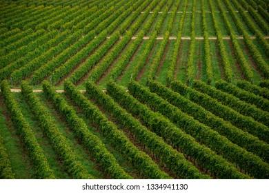 Countryside wineyard field in Tarija Bolivia