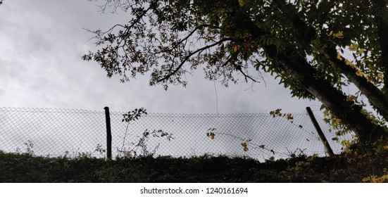 Countryside wire fence and trees.