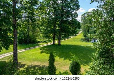 countryside yard with trees and green foliage in summer sunny day