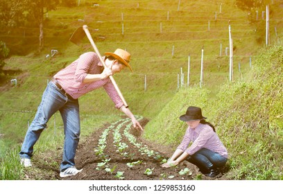 Couple agriculturist family wear plaid shirt and jeans working in vegetable garden together at high mountain area of Chiang Mai,Man hold a hoe and point the finger,Woman sitting beside the vegetable,