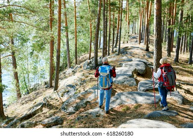 Couple of backpackers trekking in the forest on summer day