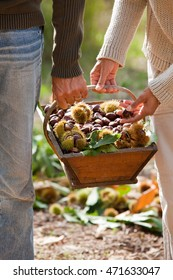 couple with a basket full of chestnuts