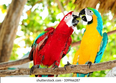 Couple of beautiful carribean maccaws on exotic beach