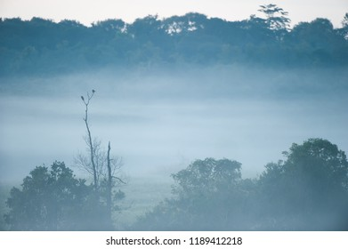 Couple birds breeding in the tree and the mist. Winter Season. Phukaew Wildlife Sanctuary, Thailand. mountain and tropical forest backgrounds. Copy space. Blue tone.