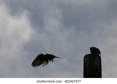 Couple of birds stay on light post
