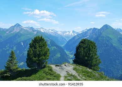 Couple of bush tree on the mountain with Alps landscape in the background