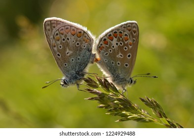 couple of butterflies mating on a plant