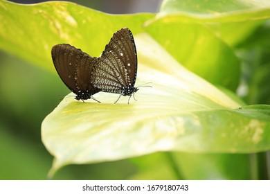 Paar Schmetterling auf grünem Hintergrund