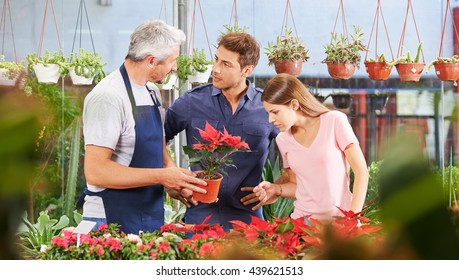 Couple buying poinsettia plant in nursery shop and talking to gardener