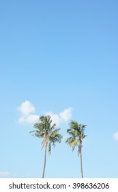 Couple of Coconut palm tree with sky