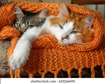 A couple of cozy cats sleeping in warmth, covered with a knitted wool blanket