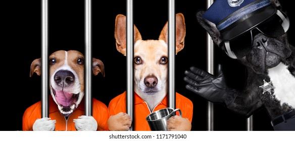 couple of  criminal dogs behind bars in police station, jail prison, or shelter  for bad behavior, police officer to the side