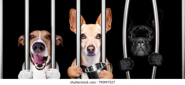 couple of  criminal dogs behind bars in police station, jail prison, or shelter  for bad behavior