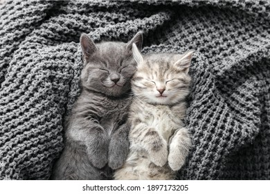Couple cute kittens in love sleeping on gray soft knitted blanket. Cats rest napping on bed. Feline love and friendship on valentine day. Comfortable pets sleep at cozy home. Top view