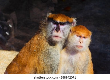 Couple of cute monkey in the wild.
