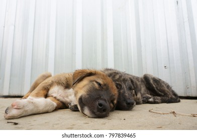 Couple of dirty puppy sleeping on the floor