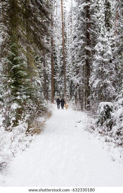 Couple with a Dog Hiking Forest Path in Winter