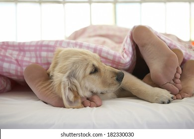 couple and dog on bed at morning