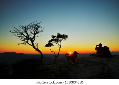 Couple, dog and trees silhouettes at sunrise in Brazil